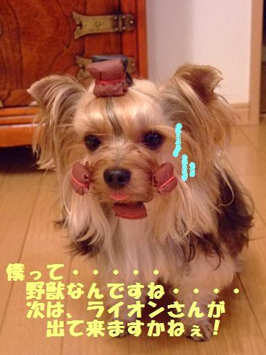 2007_1003no10013.jpg