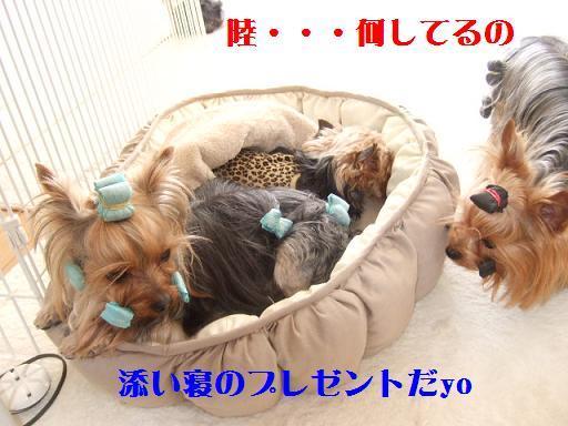 2008_0216no10031.jpg