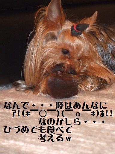 2008_0216no10008.jpg