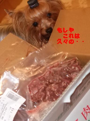 2008_1102no10012.jpg