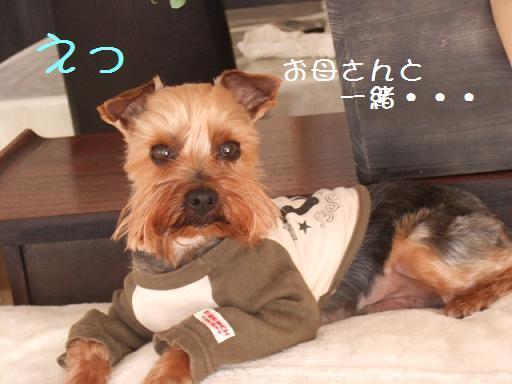 2008_0409no10001.jpg