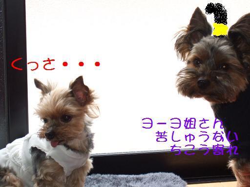 2008_0409no10014.jpg