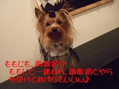 2007_0318no10037.jpg