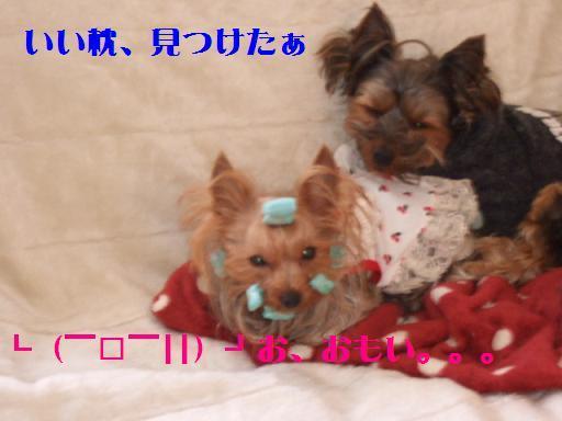 2008_0125no10002.jpg