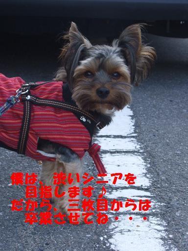 2007_1024no10005.jpg