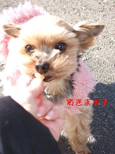 2008_0118no10044.jpg