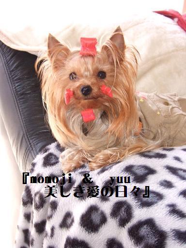 2008_0118no10075.jpg