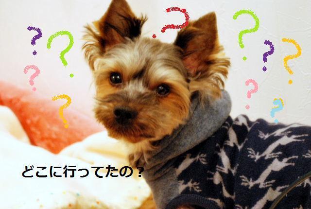 DSC_0014_20100108190555.jpg