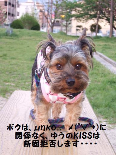 2008_0422no10084.jpg