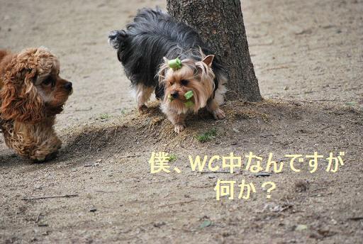 DSC_02200031.jpg
