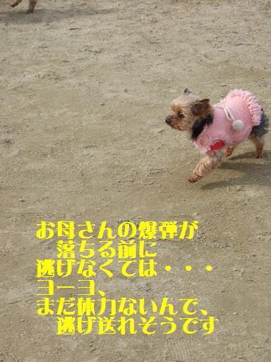 2008_0119no10110.jpg