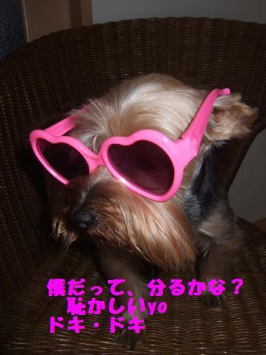 2007_0924no10004.jpg