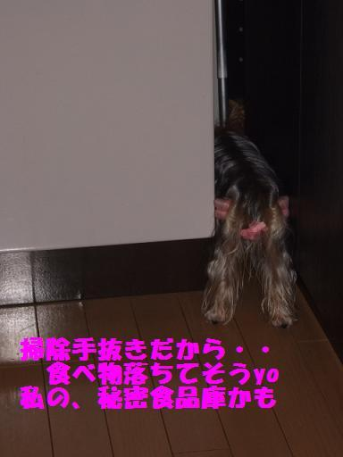 2007_1026no10009.jpg