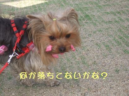 2007_0125no10006.jpg