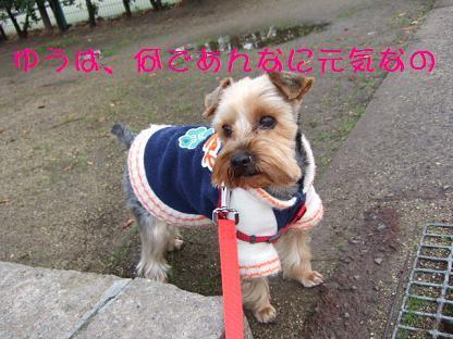 2007_0106no10013.jpg
