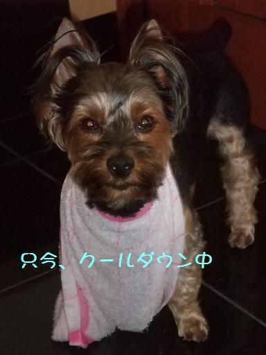 2008_0812no10013.jpg