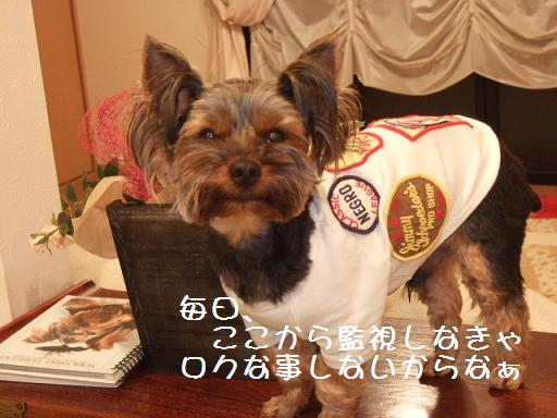 2008_0331no10018.jpg