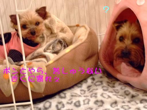2008_0114no10001.jpg