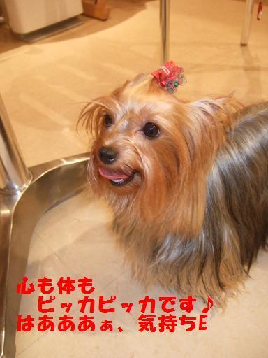 2007_1006no10022.jpg