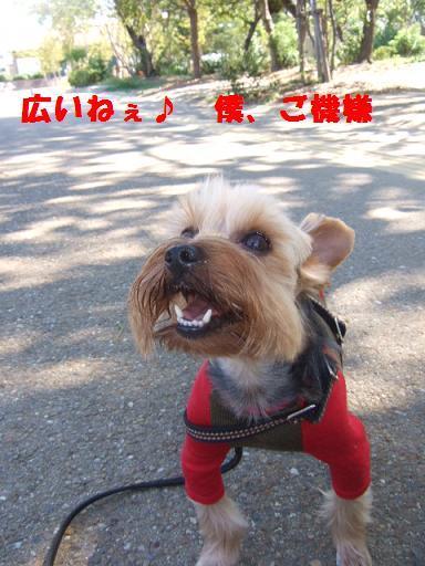 2007_1006no10006.jpg