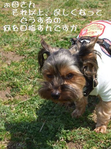 2008_0401no10001.jpg