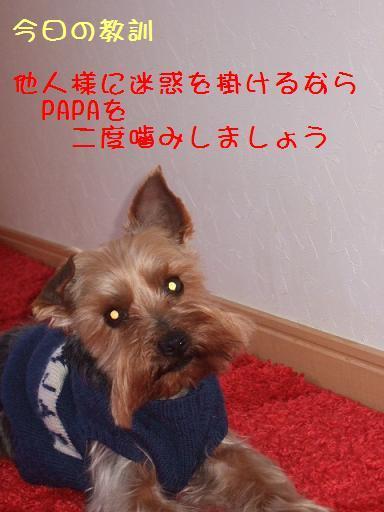2008_0308no10009.jpg
