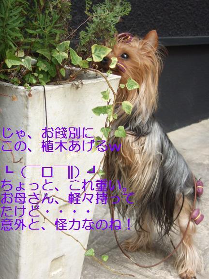 2007_0402no10015.jpg
