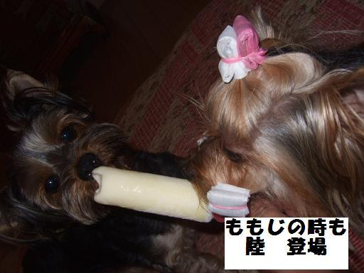 2007_0918no10002.jpg