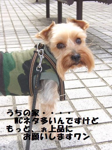 2007_1002no10003.jpg