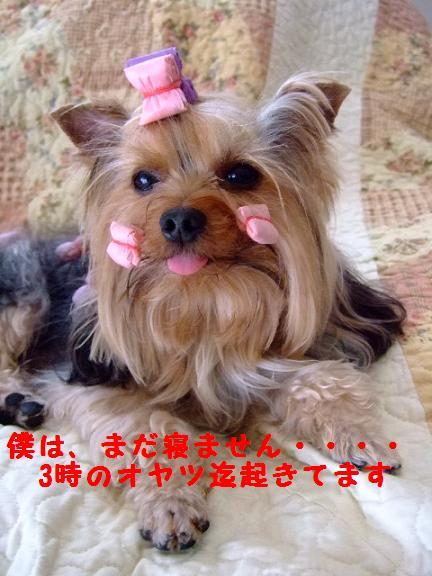 2007_0617no10010.jpg