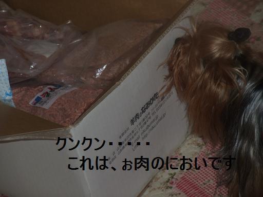 2009_03010003.jpg