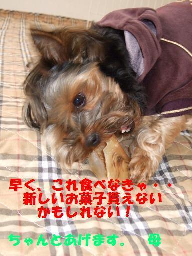 2007_1221no10022.jpg