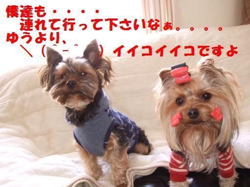 2007_1205no10016.jpg