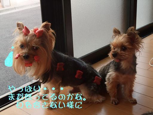 2008_0822no10012.jpg