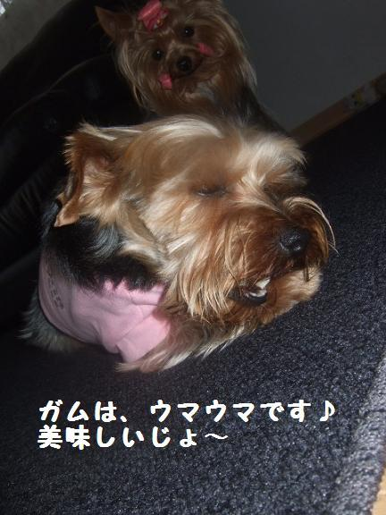 2007_0604no10009.jpg