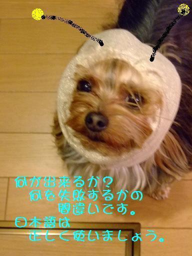 2008_0315no10029.jpg