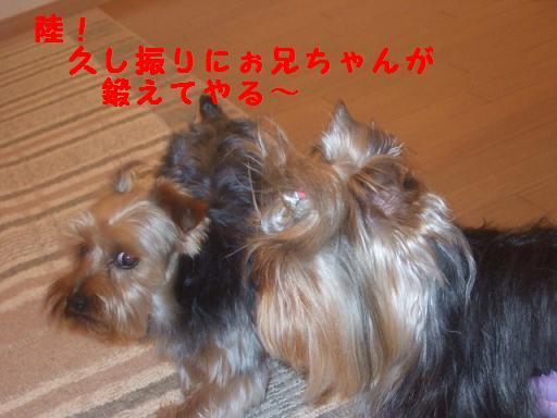 2007_0609no10003.jpg