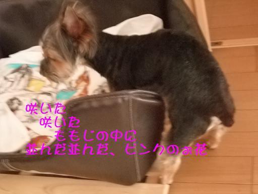 2008_0816no10026.jpg