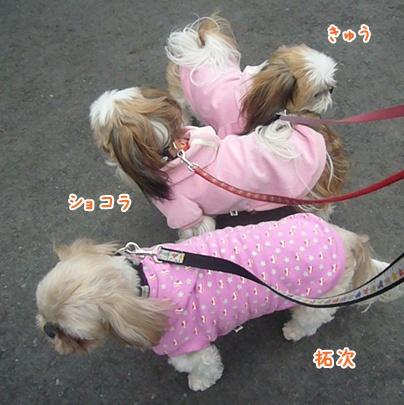110220_trio_pink_01.jpg