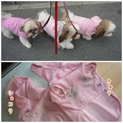 110220_trio_pink_03.jpg
