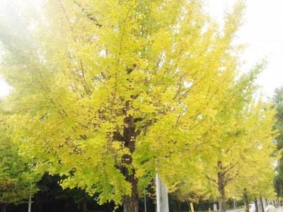 秋色 (4)