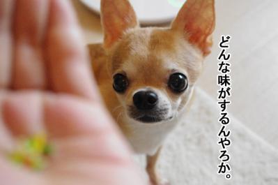 IMGP7073-4.jpg