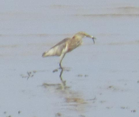 bird1_20131202_CIMG1358.jpg