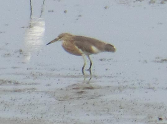 bird1_20131202_CIMG1359.jpg