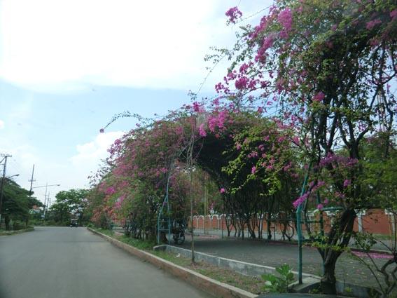 flower_20131202_CIMG1363.jpg