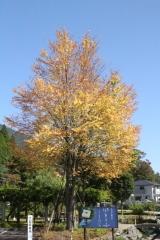 2014秋道志の森022