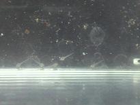 P1060533-1.jpg