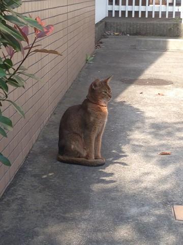 凛々しい猫 (1) (コピー)