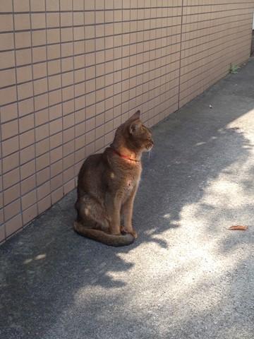 凛々しい猫 (3) (コピー)