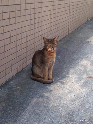 凛々しい猫 (4) (コピー)